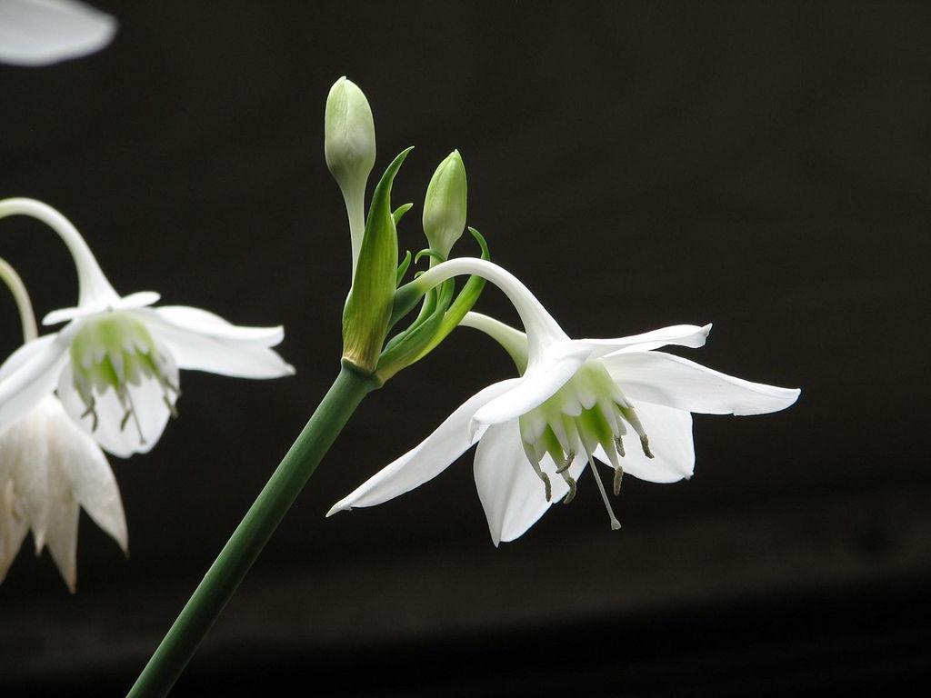 Красивые букеты белые лилии с розами картинки пошли